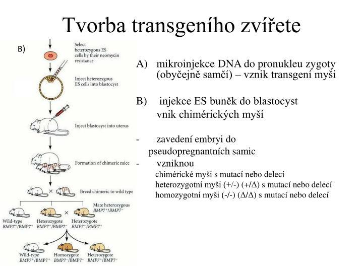 Tvorba transgeního zvířete