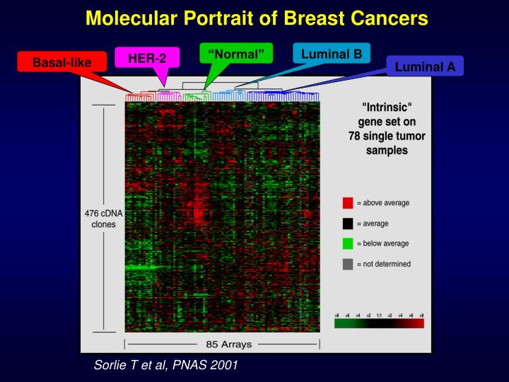 Molecular Portrait of Breast Cancers