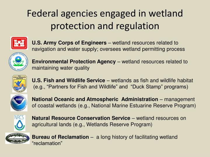 Federal agencies engaged in wetland protection and regulation