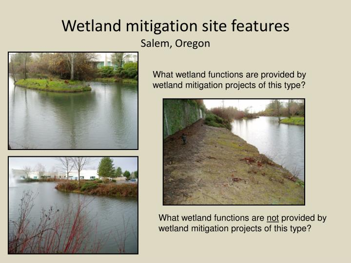Wetland mitigation site features