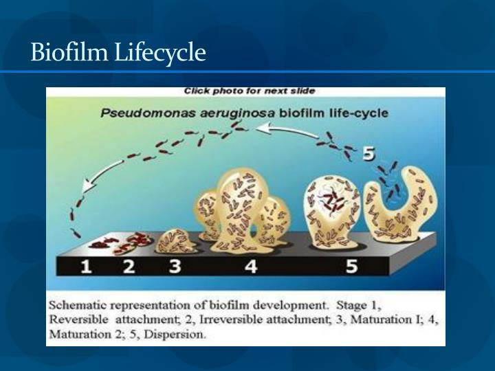Biofilm Lifecycle