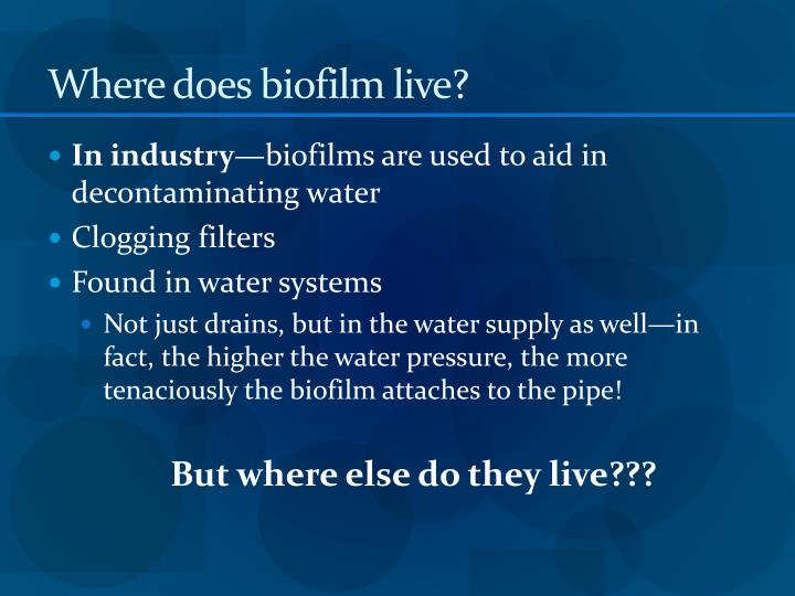 Where does biofilm live?