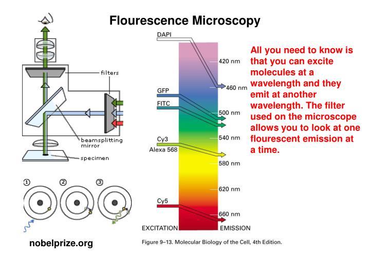 Flourescence Microscopy