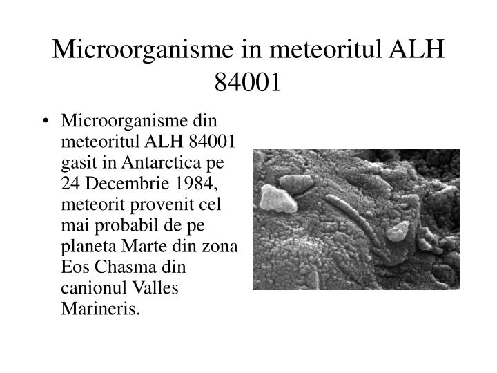 Microorganisme in meteoritul ALH 84001