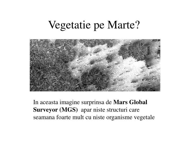 Vegetatie pe Marte?