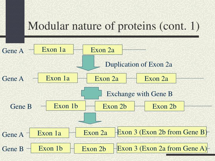 Modular nature of proteins (cont. 1)