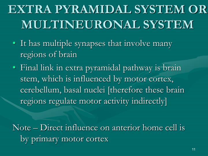 EXTRA PYRAMIDAL SYSTEM OR MULTINEURONAL SYSTEM
