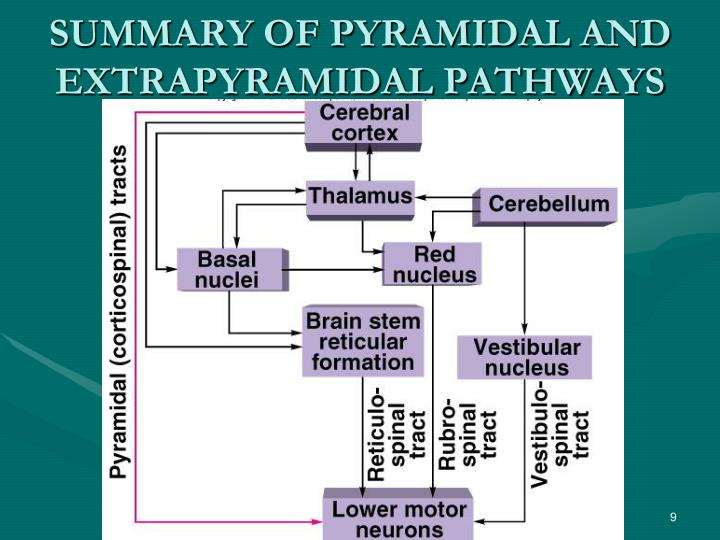 SUMMARY OF PYRAMIDAL AND EXTRAPYRAMIDAL PATHWAYS
