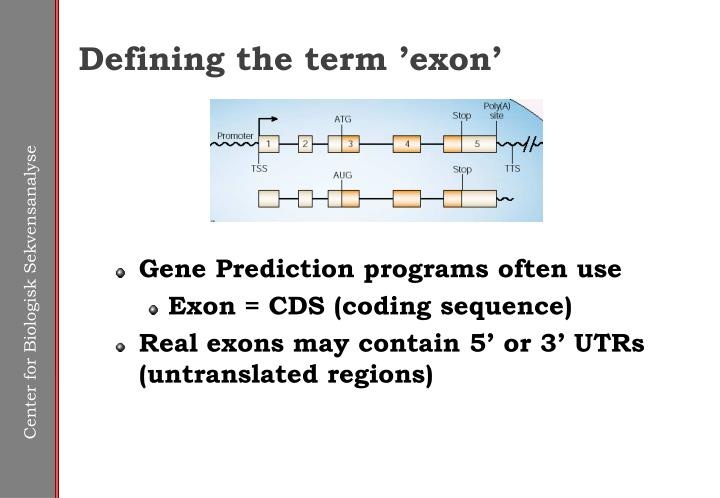 Defining the term 'exon'