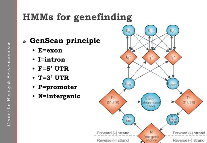 HMMs for genefinding