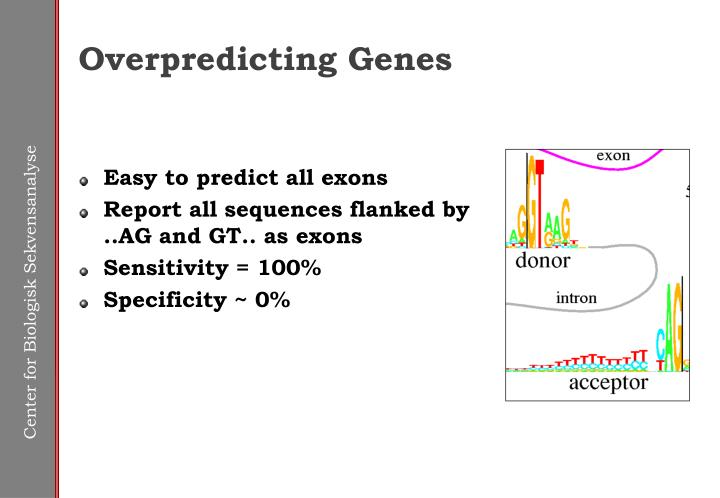 Overpredicting Genes