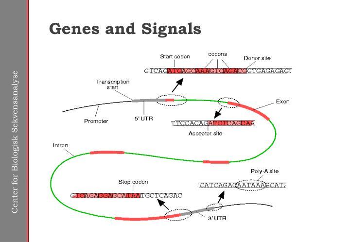 Genes and Signals