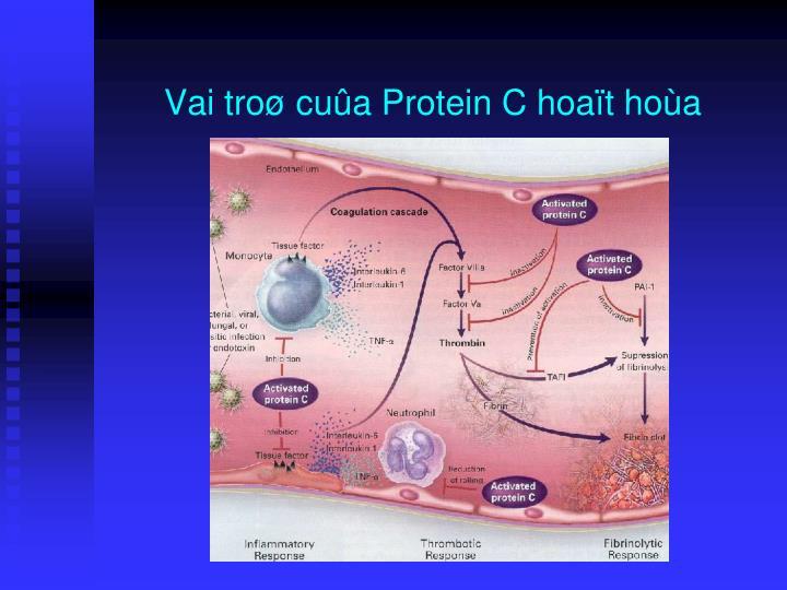 Vai troø cuûa Protein C hoaït hoùa