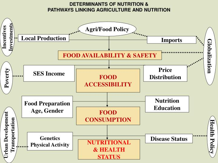 DETERMINANTS OF NUTRITION &
