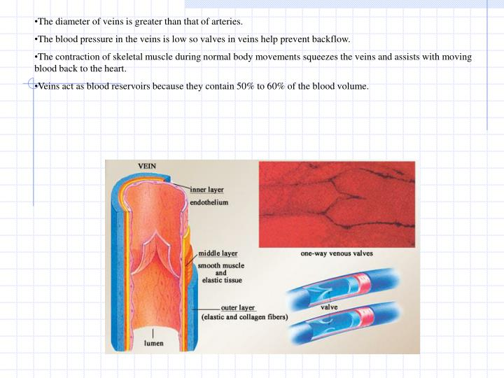 The diameter of veins is greater than that of arteries.