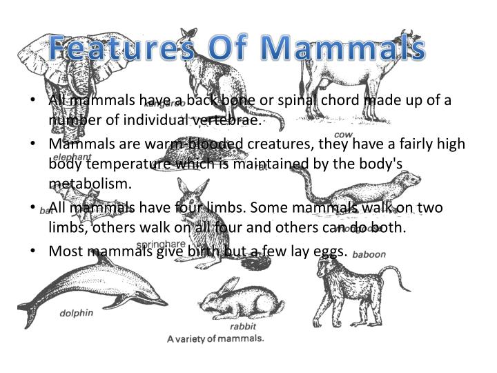 Features Of Mammals