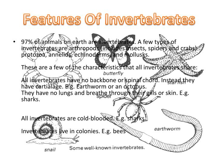 Features Of Invertebrates