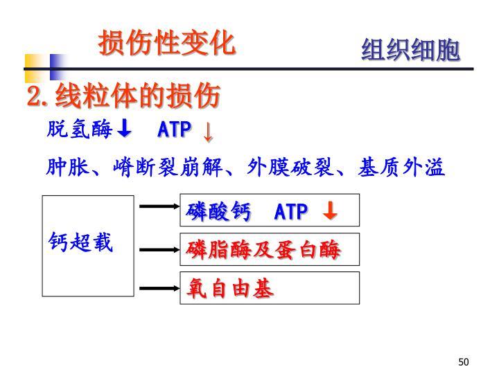 磷脂酶及蛋白酶