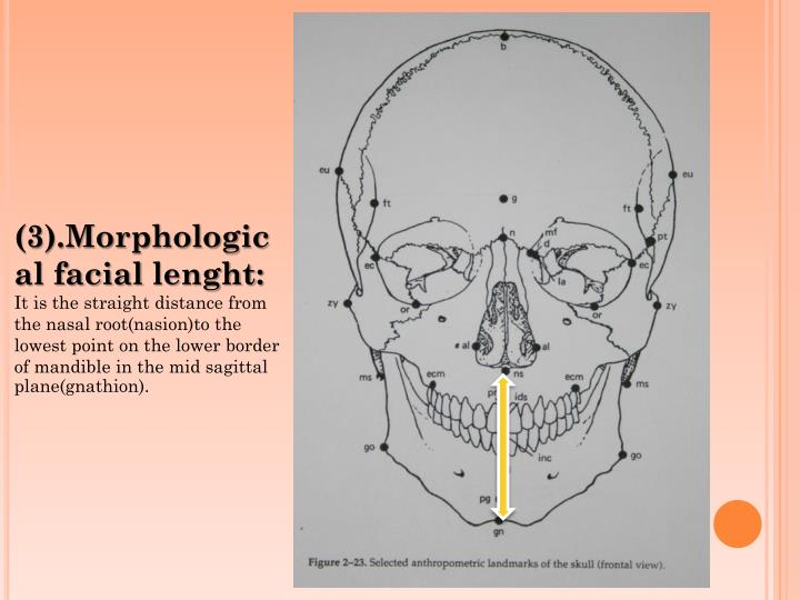 (3).Morphological
