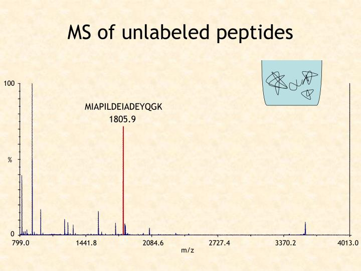 MS of unlabeled peptides