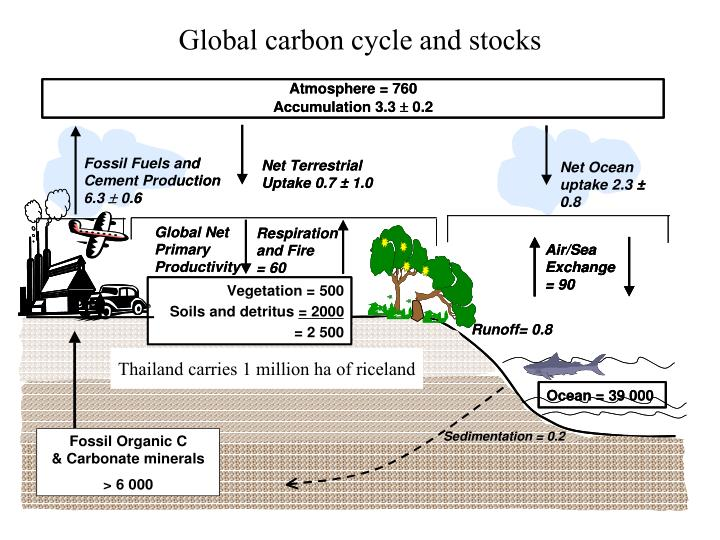 Global carbon cycle and stocks