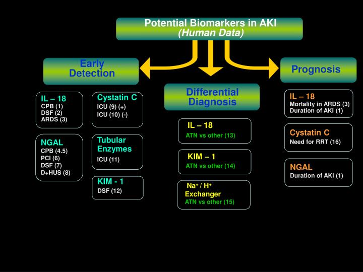 Potential Biomarkers in AKI