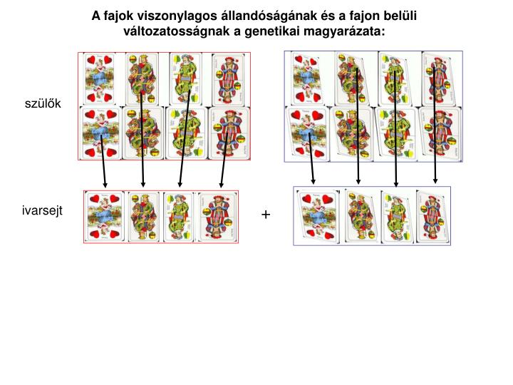 A fajok viszonylagos llandsgnak s a fajon belli vltozatossgnak a genetikai magyarzata: