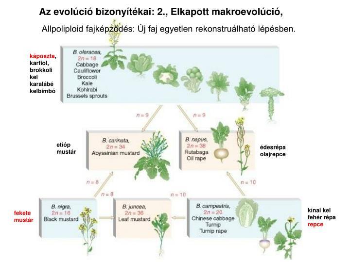 Az evolci bizonytkai: 2., Elkapott makroevolci,