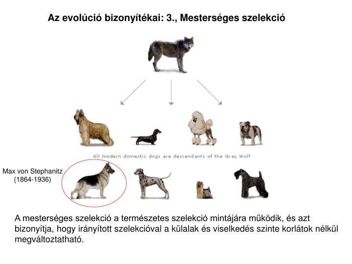 Az evolci bizonytkai: 3., Mestersges szelekci