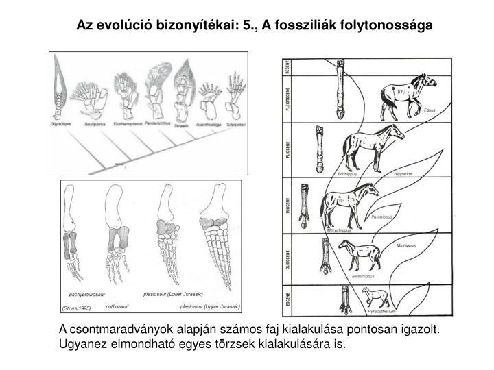 Az evolci bizonytkai: 5., A fosszilik folytonossga