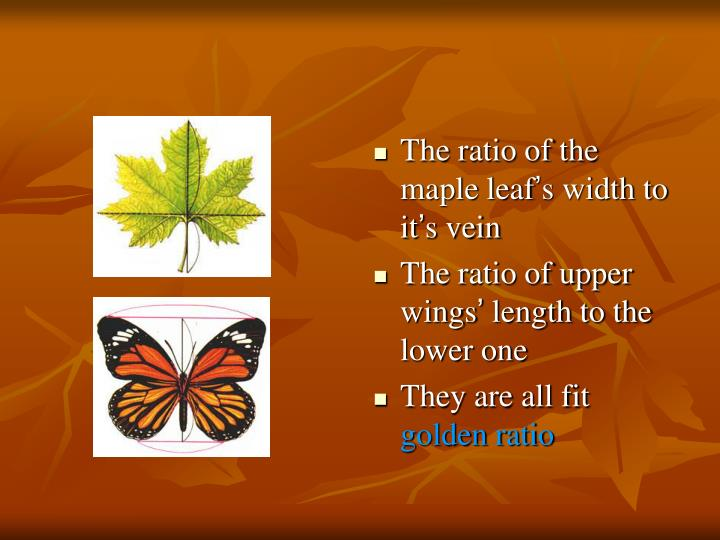 The ratio of the maple leaf