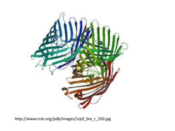 http://www.rcsb.org/pdb/images/1opf_bio_r_250.jpg