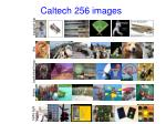 caltech 256 images
