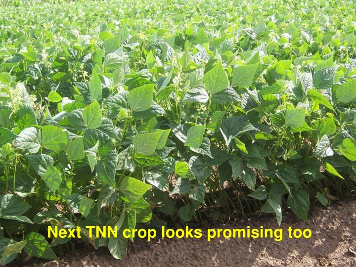 Next TNN crop looks promising too