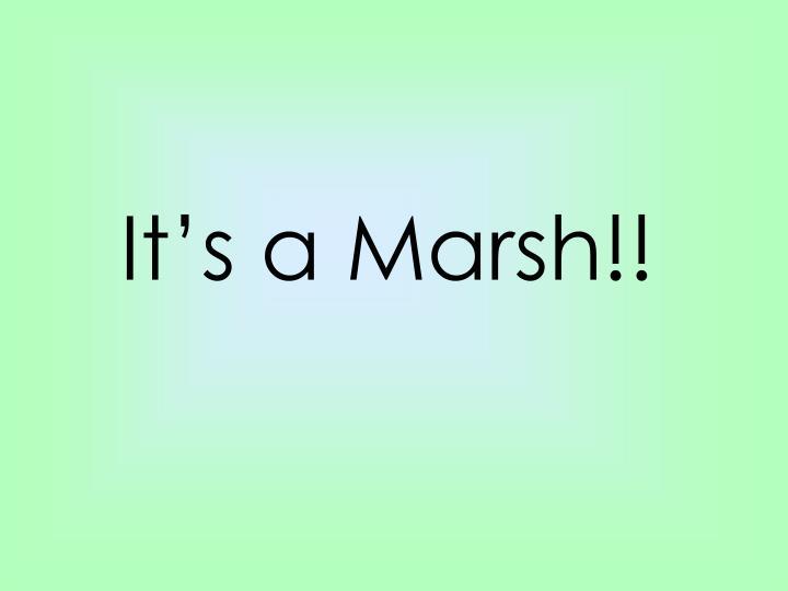 It's a Marsh!!