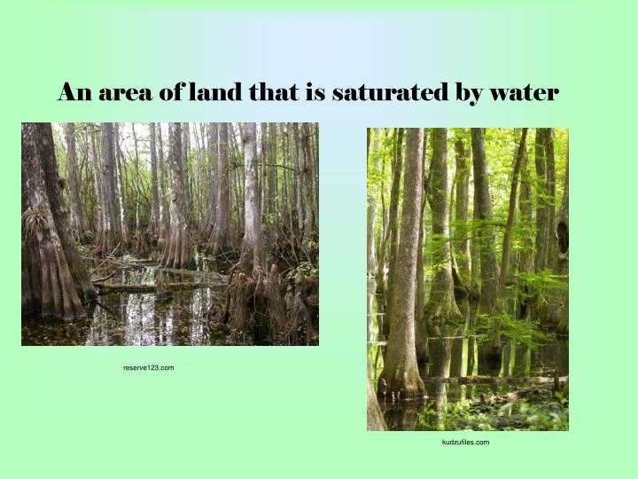 An area of land that is saturated by water