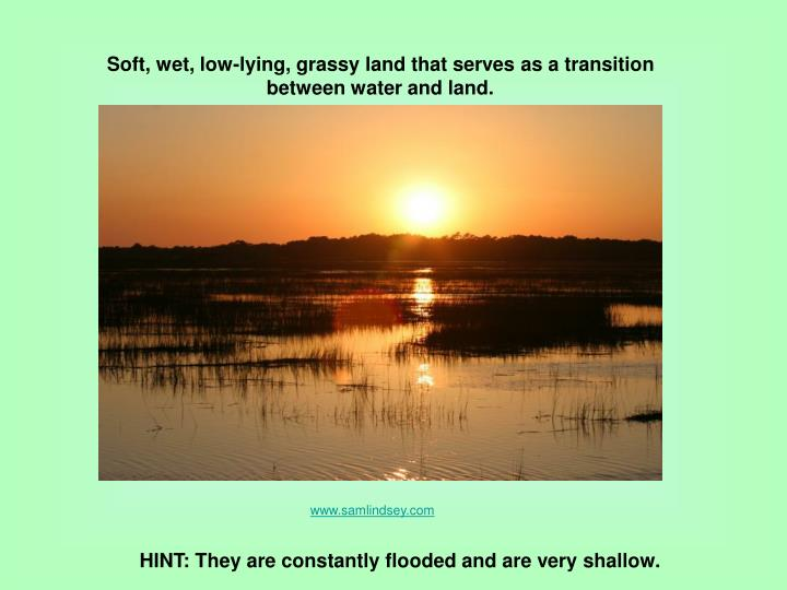 Soft, wet, low-lying, grassy land that serves as a transition between water and land.
