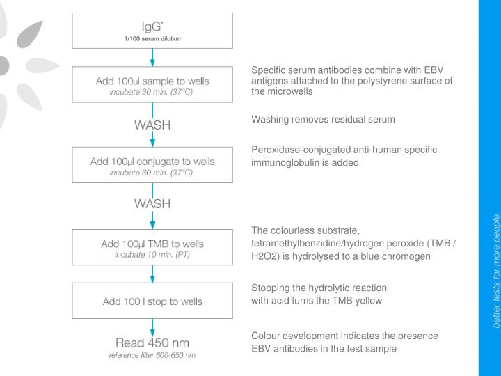 Specific serum antibodies combine with EBV