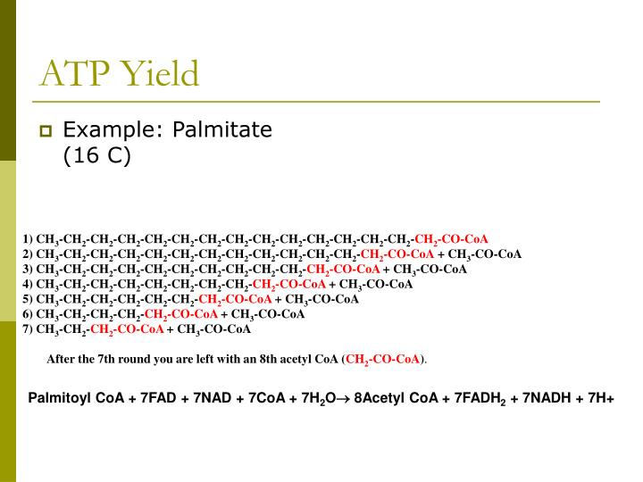Example: Palmitate (16 C)