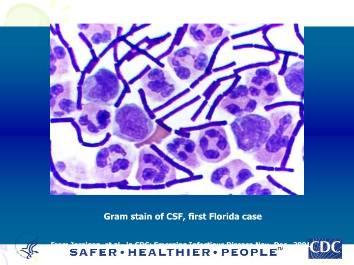 Gram stain of CSF, first Florida case