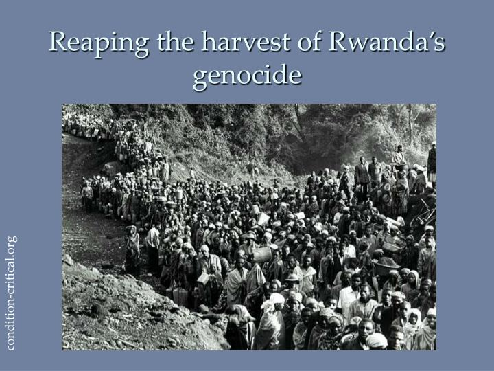 Reaping the harvest of Rwanda's genocide