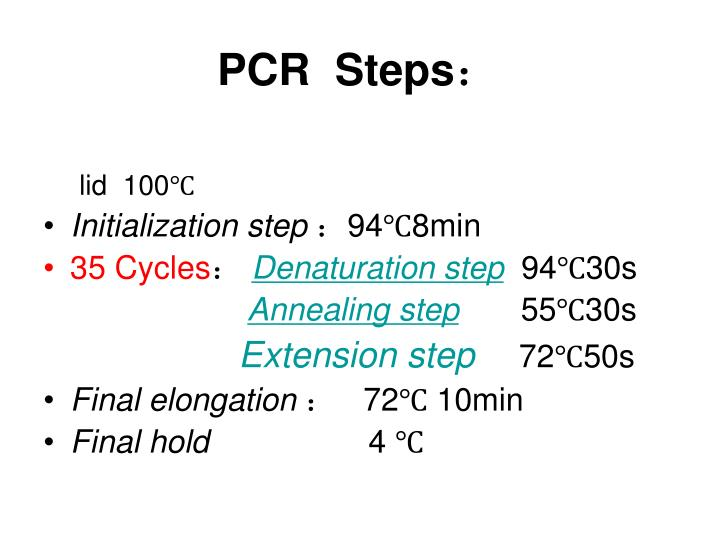 PCR  Steps