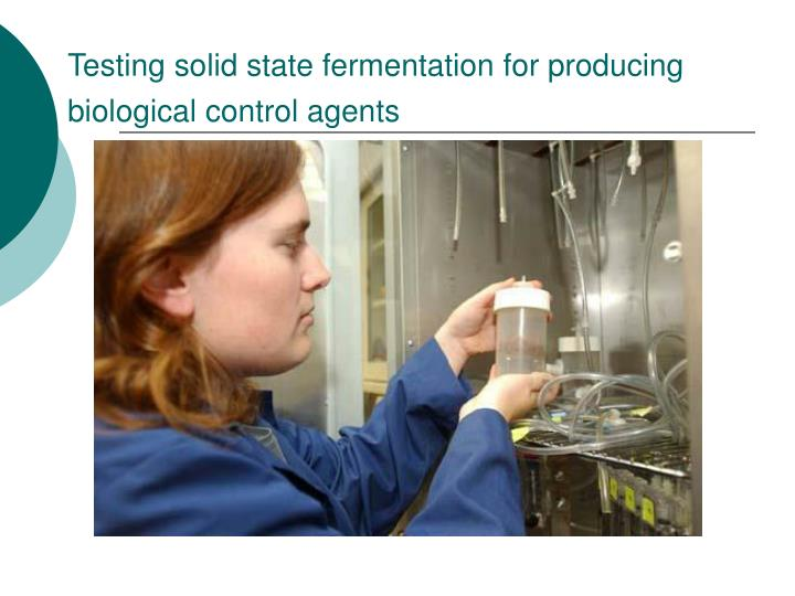 Testing solid state fermentation for producing biological control agents