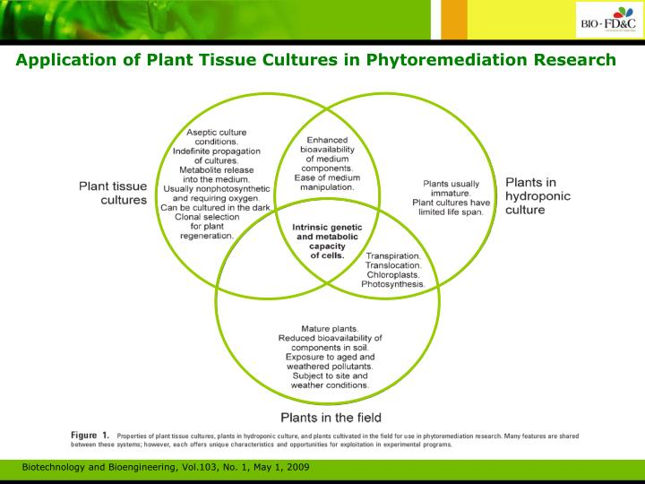 Application of Plant Tissue Cultures in Phytoremediation Research