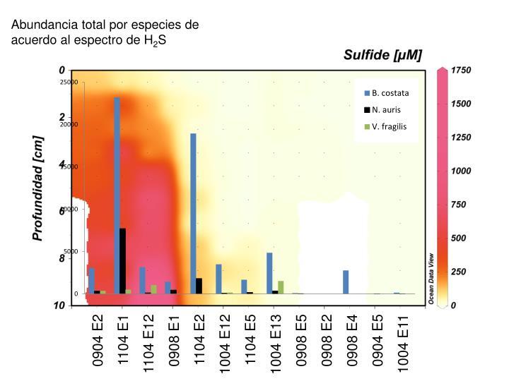 Abundancia total por especies de acuerdo al espectro de H
