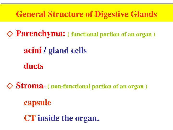 General Structure of Digestive Glands