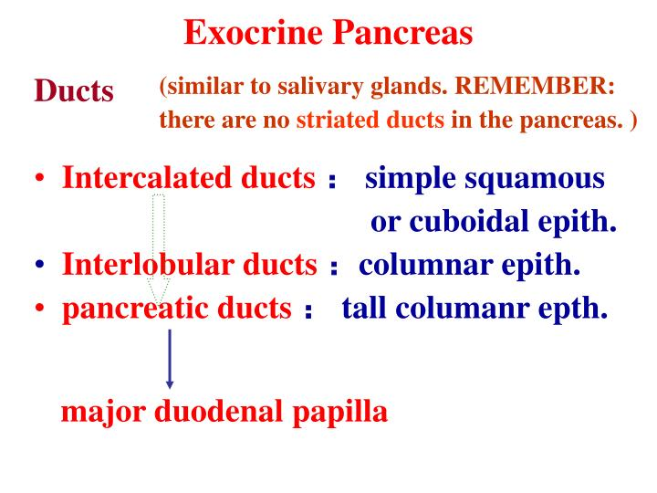 Exocrine Pancreas
