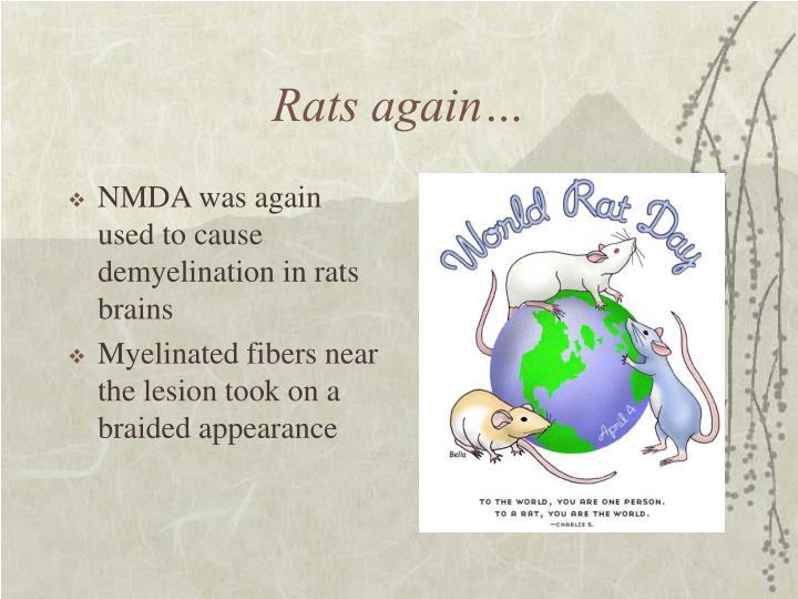 Rats again…