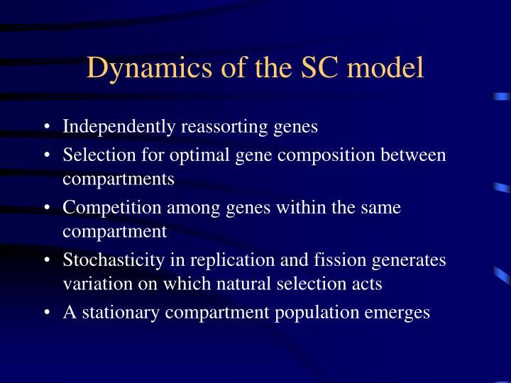 Dynamics of the SC model