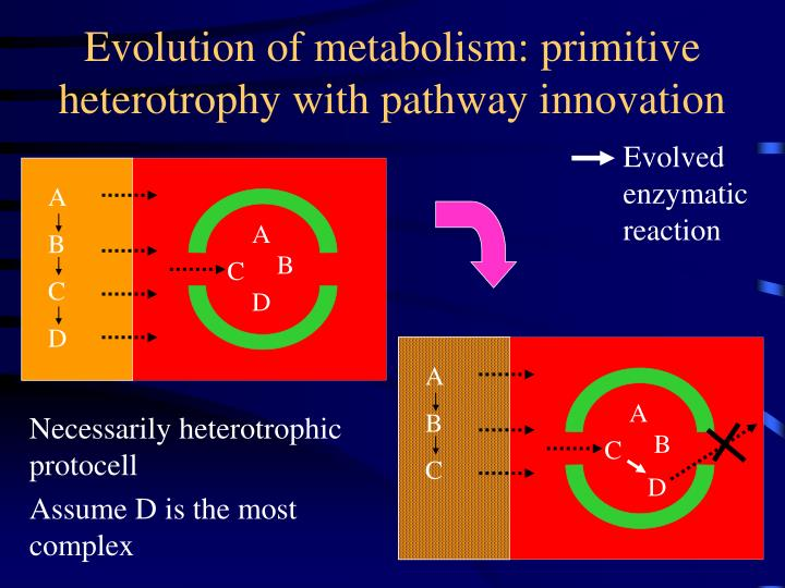 Evolution of metabolism: primitive heterotrophy with pathway innovation